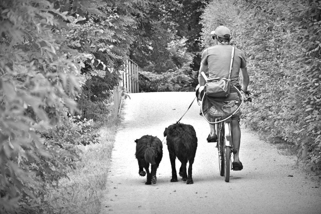 Das Laufen am Fahrrad ist eine schöne Beschäftigung für Mensch und Hund