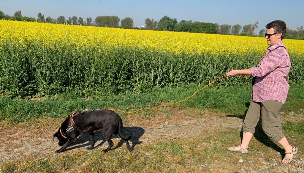 Die Fährtenarbeit ist eine artgerechte Beschäftigung für den Hund und fördert seine Nasenarbeit